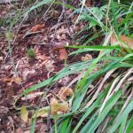 funghi-ischia