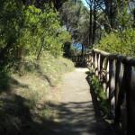 sentiero-bosco-maddalena
