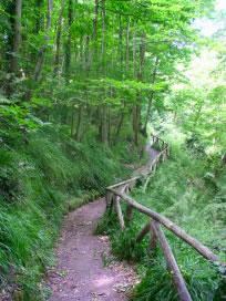 Sentiero della lucertola Rossa