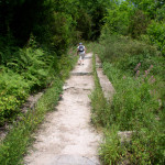 sentiero-lucertola-rossa