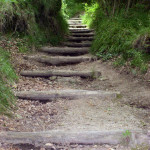 sentiero-lucertola-rossa2