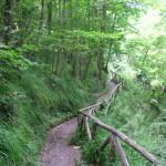 sentiero-lucertola-rossa3