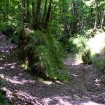 sentiero-lucertola-rossa5